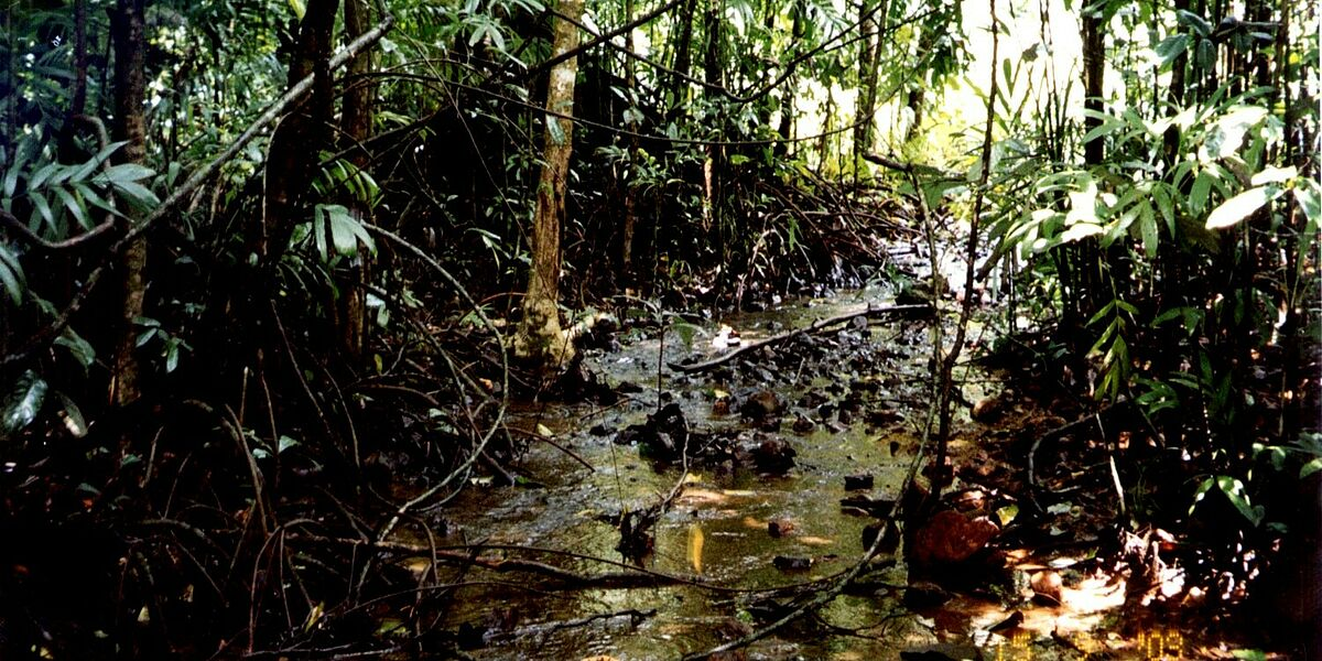 The Values of Sacred Swamps - belief based nature conservation in a secular world